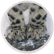Snow Leopard Feet Round Beach Towel