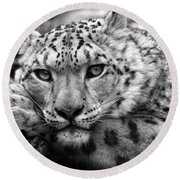 Snow Leopard In Black And White Round Beach Towel