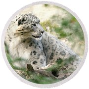 Snow Leopard Pose Round Beach Towel