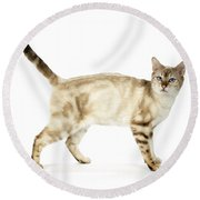 Snow Marble Bengal Cat Round Beach Towel