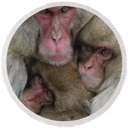 Snow Monkey And Young Round Beach Towel