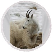 Snow White Mountain Goat Round Beach Towel