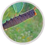 Snowberry Clearwing Hawk Moth Caterpillar - Hemaris Diffinis Round Beach Towel