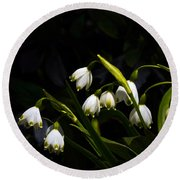 Snowdrops And Dark Background Round Beach Towel