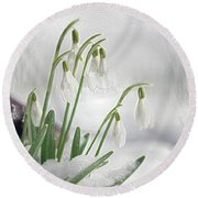 Snowdrops On Ice Round Beach Towel