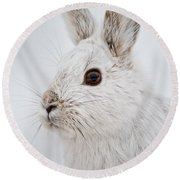 Snowshoe Hare Pictures 128 Round Beach Towel