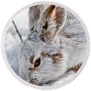 Snowshoe Hare Pictures 133 Round Beach Towel