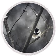 Snowy Chickadee Round Beach Towel by Shane Holsclaw