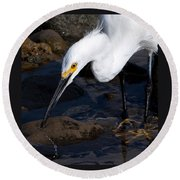Snowy Egret Dribble Round Beach Towel