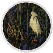 Snowy Egret In The Reeds Round Beach Towel