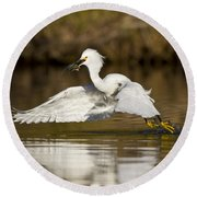 Snowy Egret With Lunch Round Beach Towel