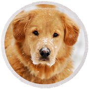 Snowy Golden Retriever Round Beach Towel by Christina Rollo