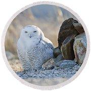Snowy Owl Among The Rocks Round Beach Towel