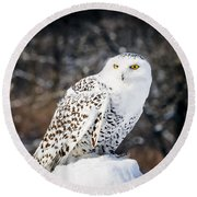 Snowy Owl Cold Stare Round Beach Towel
