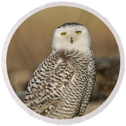 Snowy Owl Female Round Beach Towel