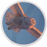 Snowy Owl Flight Round Beach Towel