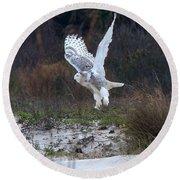 Snowy Owl In Florida 10 Round Beach Towel