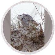 Snowy Owl In Florida 13 Round Beach Towel
