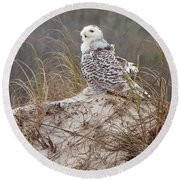 Snowy Owl In Florida 14 Round Beach Towel