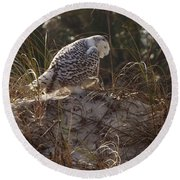 Snowy Owl In Florida 16 Round Beach Towel
