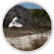 Snowy Owl In Florida 18 Round Beach Towel