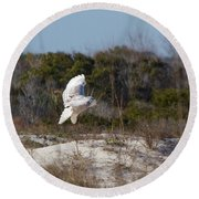 Snowy Owl In Florida 19 Round Beach Towel