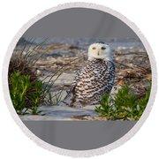 Snowy Owl In Florida 24 Round Beach Towel