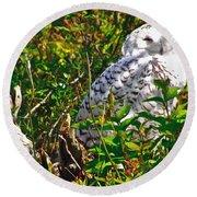 Snowy Owl In Salmonier Nature Park-nl Round Beach Towel
