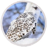 Snowy Owl Look Out Round Beach Towel