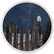 Snowy Owl On A Fence Round Beach Towel