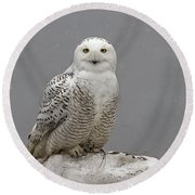 Snowy Owl On An Ice Flow Round Beach Towel