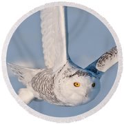 Snowy Owl Pictures 47 Round Beach Towel