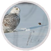 Snowy Owl Pictures 53 Round Beach Towel