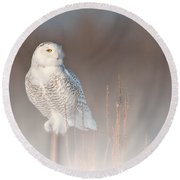 Snowy Owl Pictures 67 Round Beach Towel