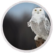 Snowy Owl Pictures 69 Round Beach Towel