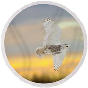 Snowy Owl Pictures 71 Round Beach Towel