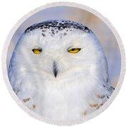 Snowy Owl Portrait Round Beach Towel