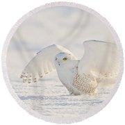 Snowy Owl- Ready For Takeoff Round Beach Towel