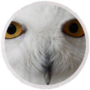 Snowy Owl Stare Round Beach Towel