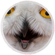 Snowy Owl Up Close And Personal Round Beach Towel