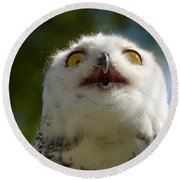 Snowy Owl With Big Eyes Round Beach Towel