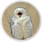 Snowy Owl Yawning Round Beach Towel