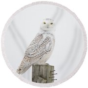 Snowy Perched Profile Round Beach Towel