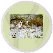 Snowy Plover And Chick Round Beach Towel