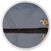 Snowy Plover On A Sandbar Round Beach Towel
