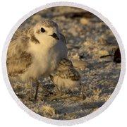 Snowy Plover Transforms Into A Spiderbird 5 Round Beach Towel