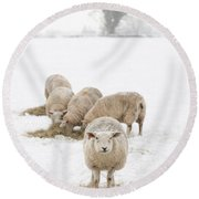 Snowy Sheep Round Beach Towel