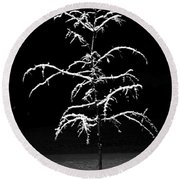 Snowy Sophistication - An Elegant Fledgling Round Beach Towel