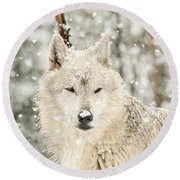Snowy Wolf Round Beach Towel