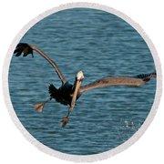 Soaring Pelican Round Beach Towel